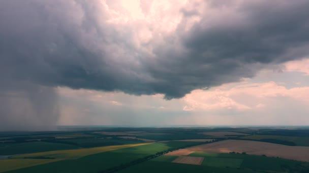 Velké žluté pole slunečnic a těžké bouřkové mraky.