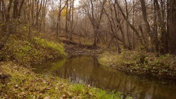 tiché creek v podzimním lese