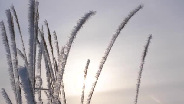 Im Winter ist trockenes Gras mit weißem Raureif bedeckt und Eisschollen funkeln in der Sonne. Nahaufnahme