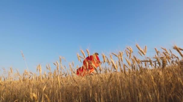 tini lány játszik egy szuperhős piros köpenyt. gyermek fut az ellen, blue sky gyönyörű fok búza mezőn.