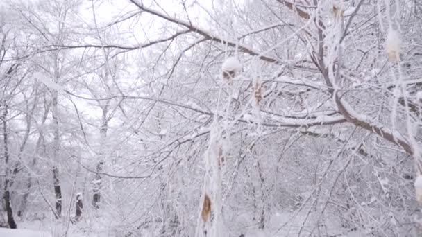 White snow lies on branches of trees in winter park
