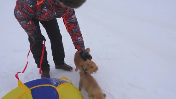 Owner caresses dogs on winter walk. Mother dog and puppy are walking on white snow with happy m n on frosty day. Man playing with dog. Pets