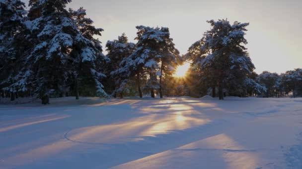wunderschöner weihnachtlicher Winterwald bei Sonnenuntergang. Kiefern im schneebedeckten Park beleuchten die Bäume und den Schnee mit hellen Sonnenstrahlen. schöne Winterlandschaft