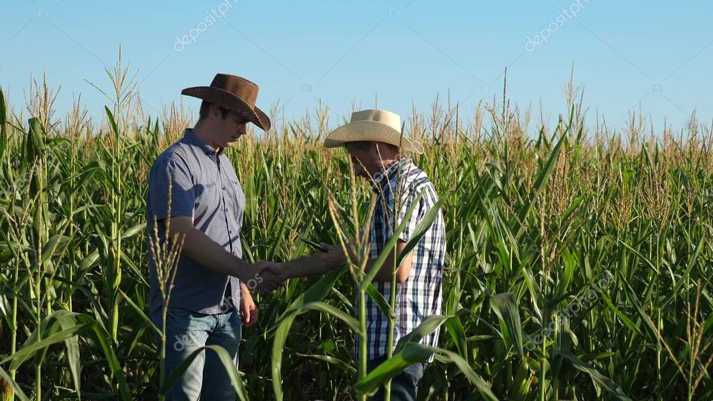 Businessmen with tablet examines their field with corn. concept of agricultural business. Farmers walks in a flowered field. Agronomists men ozamatrivayut flowering and corn cobs.