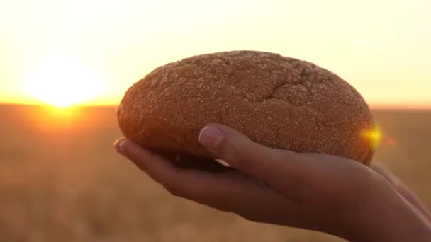 loaf of bread in the hands of a girl over a wheat field in the rays of sunset. tasty loaf of bread on the palms. fresh rye bread over Mature ears with grain. agriculture concept. bakery products