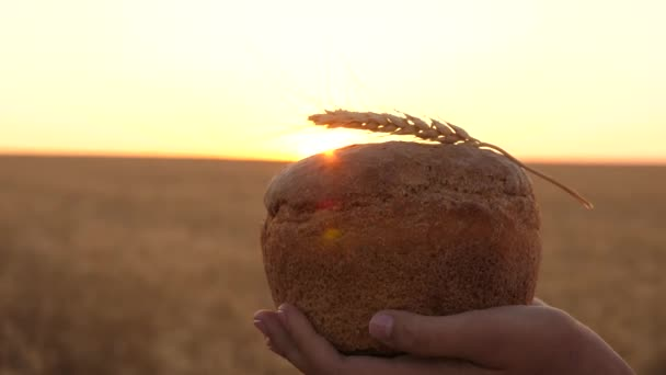 loaf of bread with an ear of wheat, in hands of girl over wheat field in sunset. close-up. Delicious bread in hands carries young beautiful woman on a wheat field. tasty loaf of bread on palms.