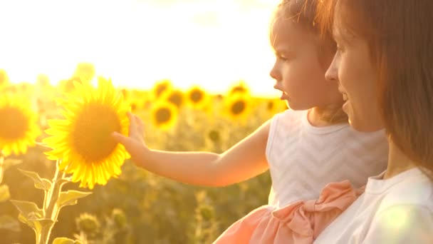 little daughter in arms of farmers mother looks at sunflower flower in the field in the rays of the beautiful sun. a loving family travels through a blooming sunflower plantation. ecological tourism
