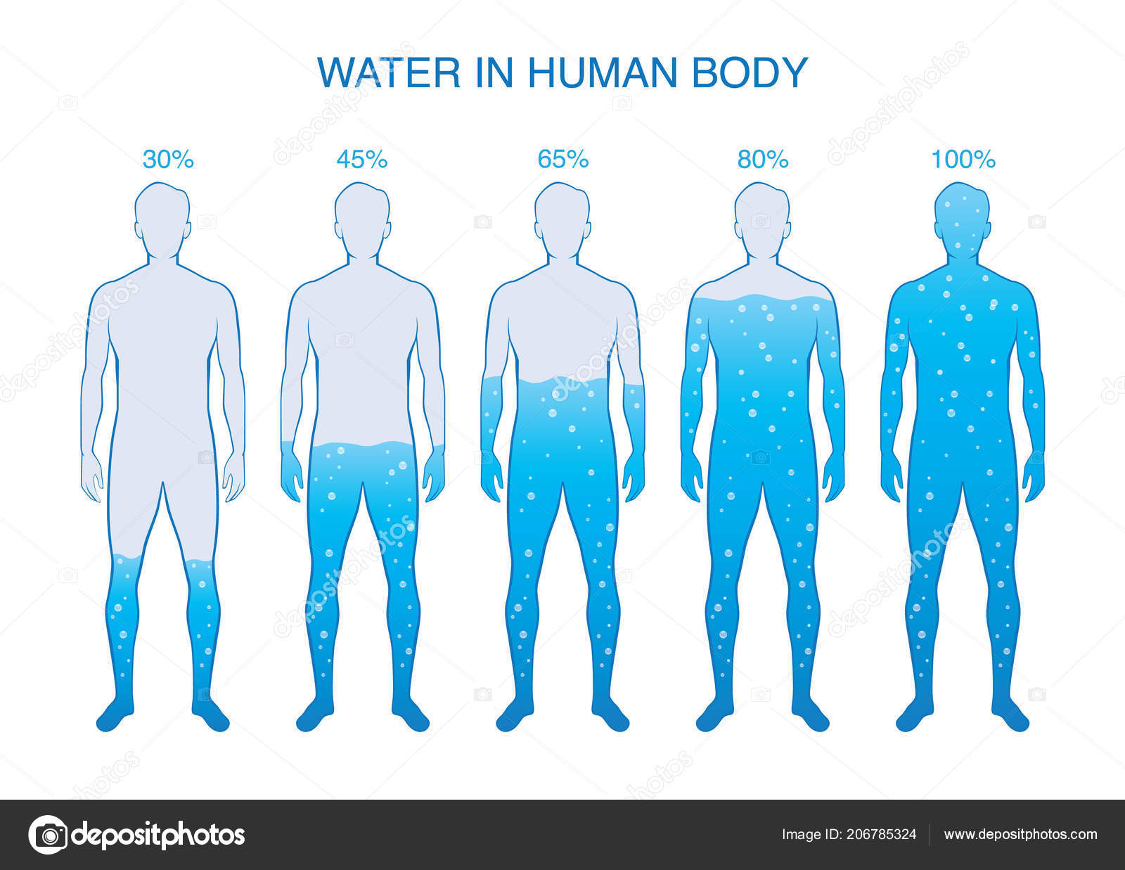 Difference Percentage Water Human Body Illustration Composition
