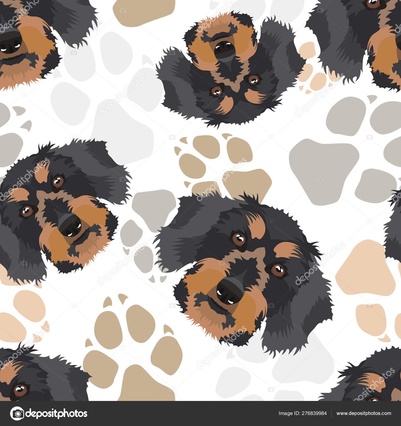 Pattern dog paws dachshund — Векторное изображение