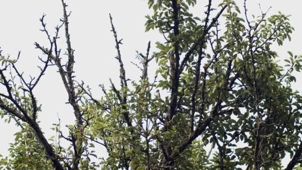 Beautiful birds sitting at tree branch outdoors singing ready for mating period slow motion. Wild animals flying up in sky on nature. Wildlife fauna protection. Ecological care earth day celebration