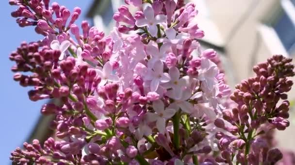 zblízka střílel z fialové květy během dne
