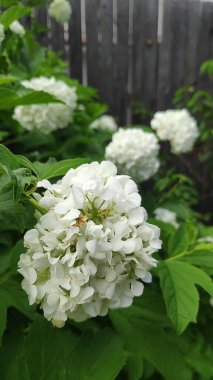 beautiful blossom flowers in summer garden, nature background