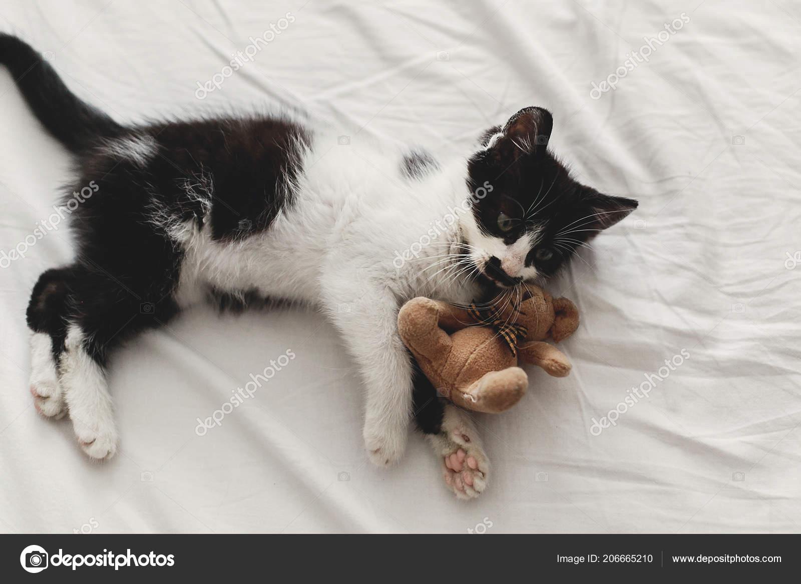 Cute Little Kitten Playing Little Teddy Bear Toy White Bed Stock