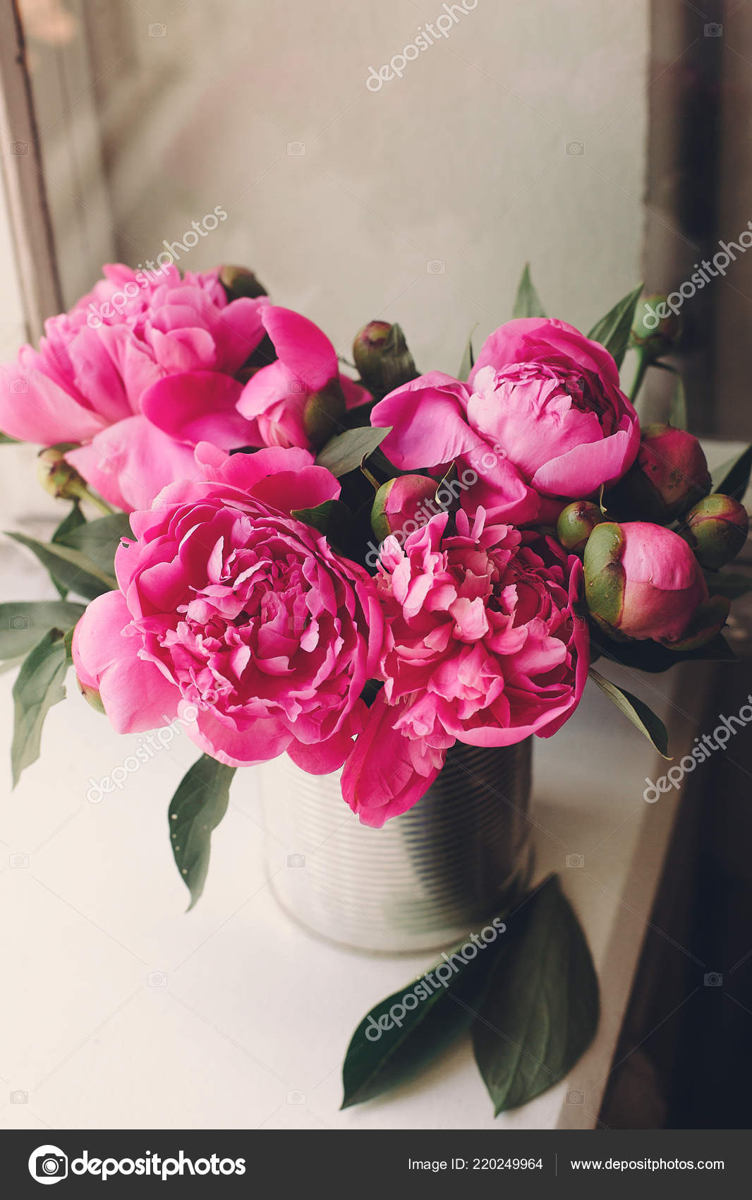 Lovely Pink Peonies Bouquet Vase Rustic White Wooden Background