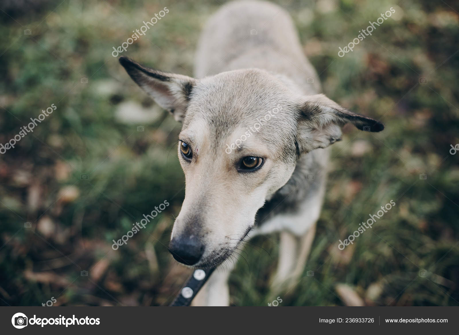 Scared Stray Dog Sad Eyes Emotions Walking City Street