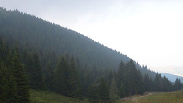 Posouvání doleva přes stromů jehličnatých lesů na hoře, mlhavo a zataženo den.
