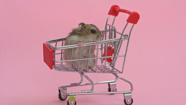hamsters runs away and sits in shopping cart