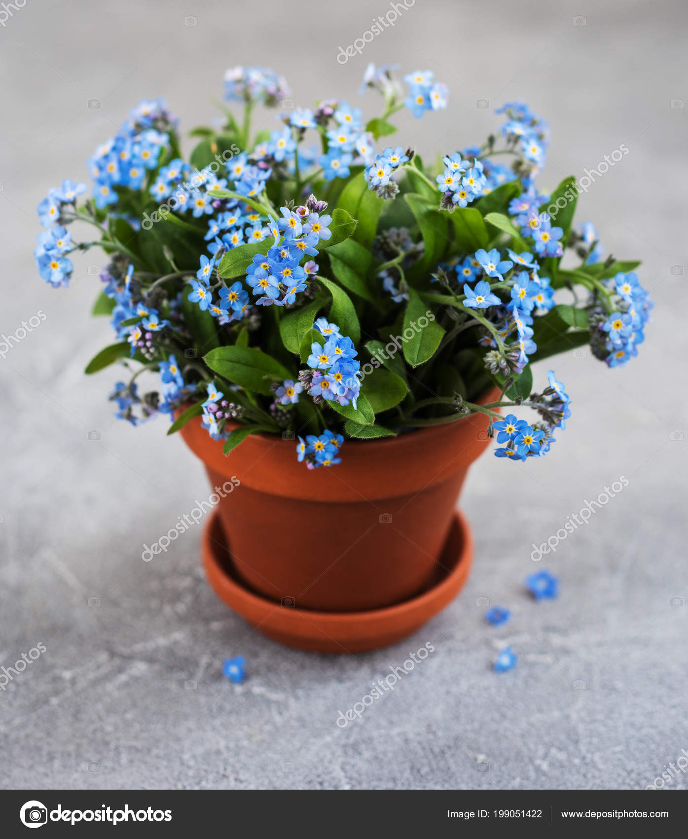 Forget Flowers Small Flower Pot Table — Stock Photo
