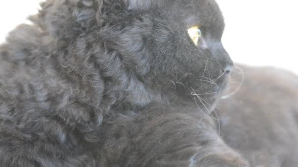 www. peloso nero micio