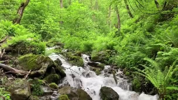 Nature. River in the mountains. Krasnaya Polyana, Sochi, Russia