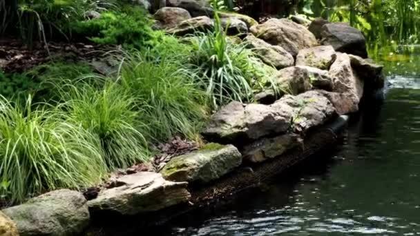 Zahradní vodopád. Zahradní jezírka s vodou květy. Krásný rybník v zahradě uprostřed kamene během
