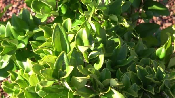 Nová výsadba zahradních lůžek s rostlinami, křovinami. Zahradní Design