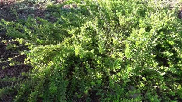 Új ültetés a kerti ágyak növényekkel, cserjék. Kerttervezés