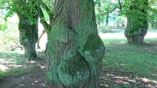 stromy parků za slunečných dnů