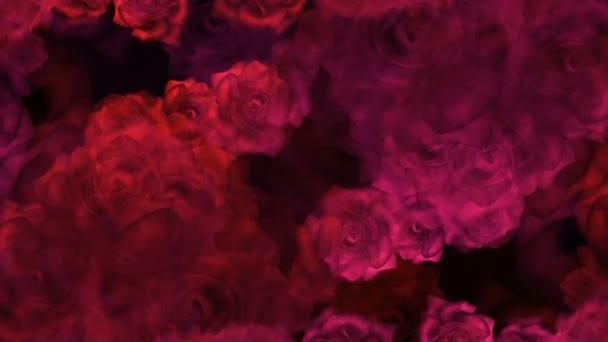 Červené růže poupata na pozadí pro svatební video