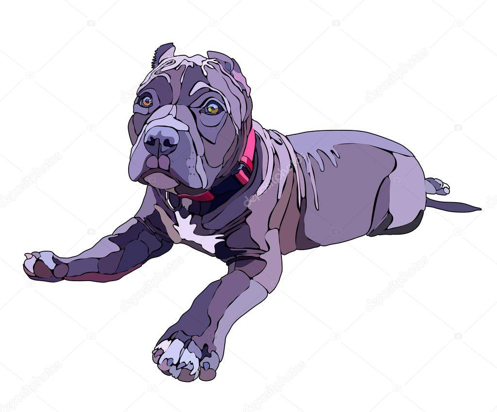 Lying pitbull, vector illustration. EPS 10