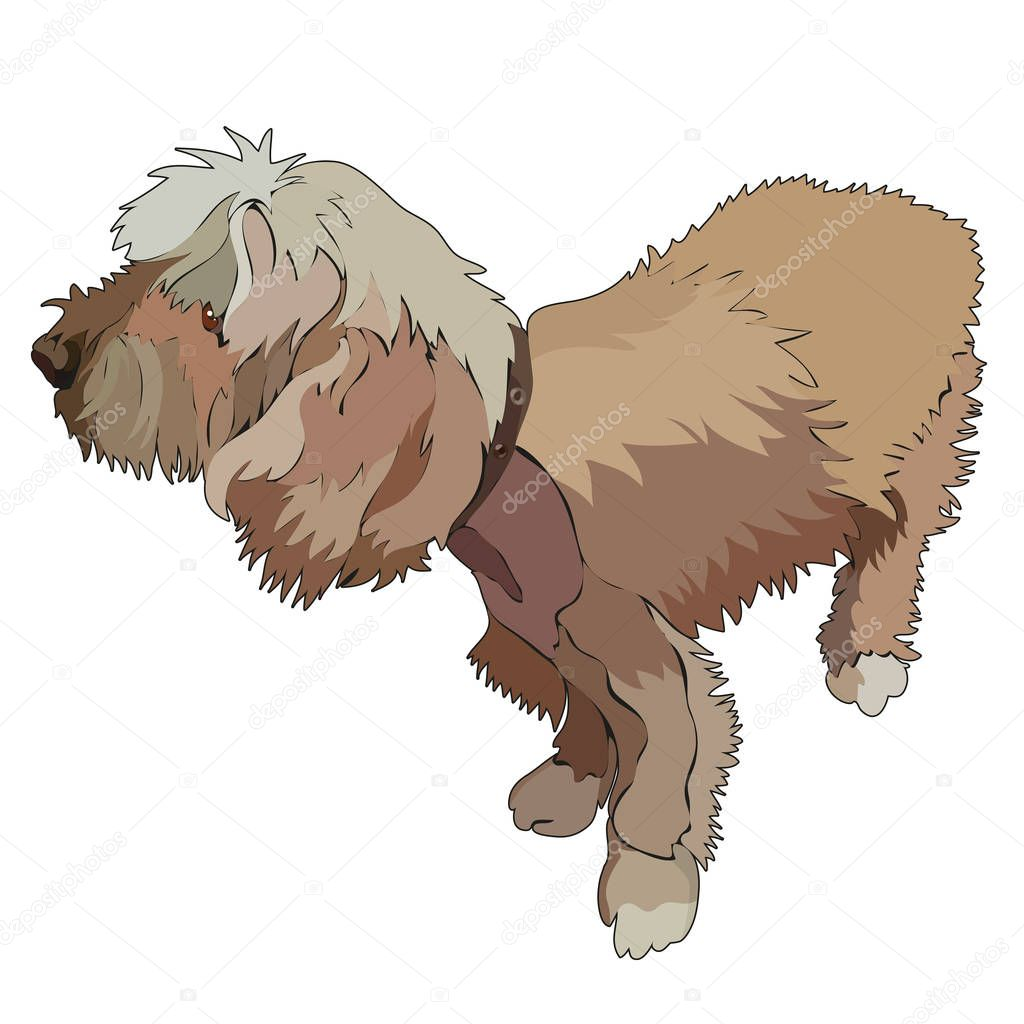 Illustration of shaggy dog. Vector, EPS10