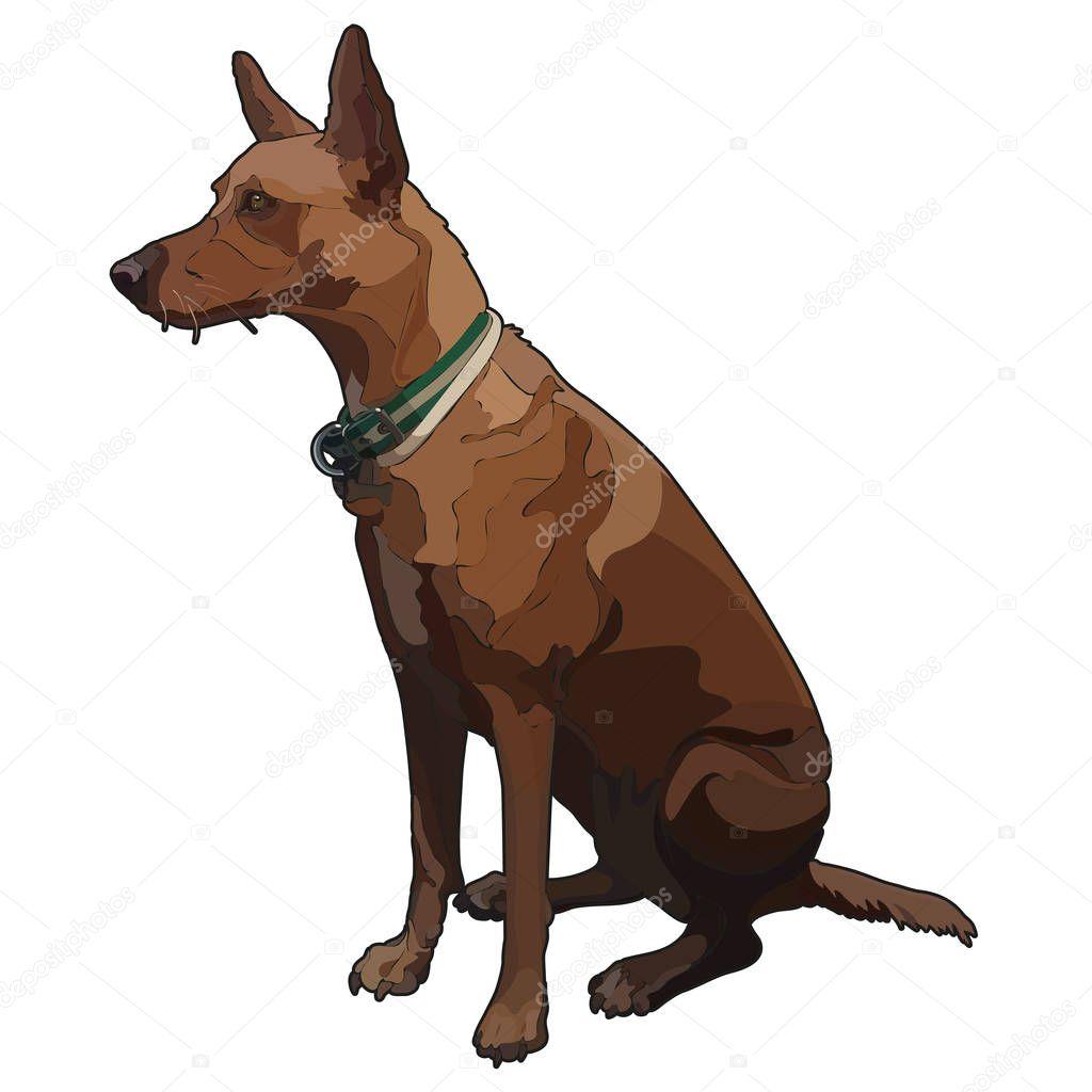 Illustration of sitting dog. Vector, EPS10