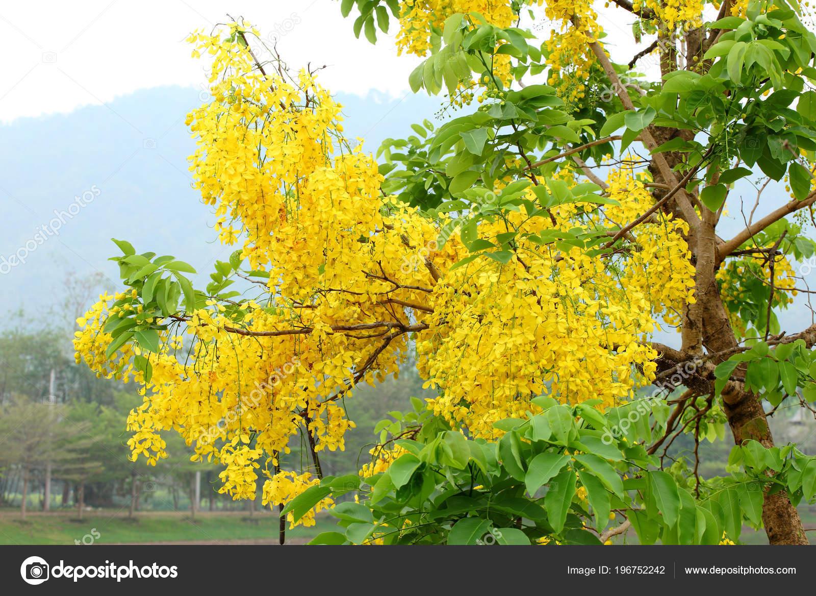 Trees Yellow Flowers Mountain Background Stock Photo