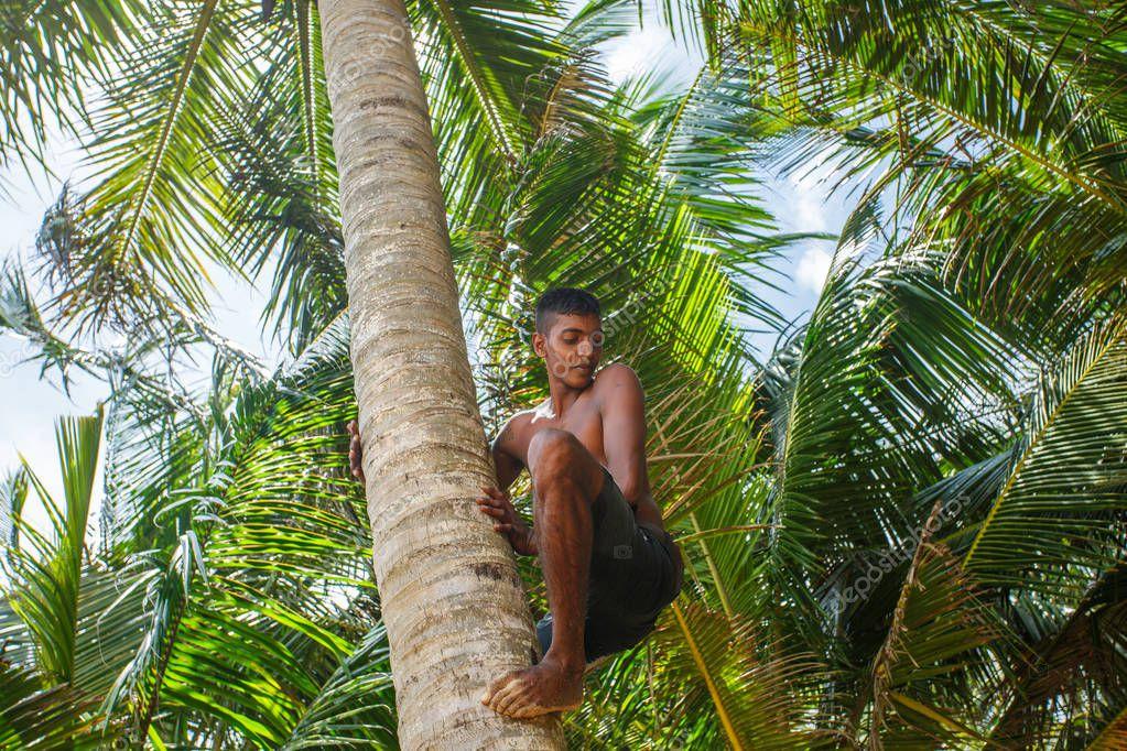Man climbing a palm tree