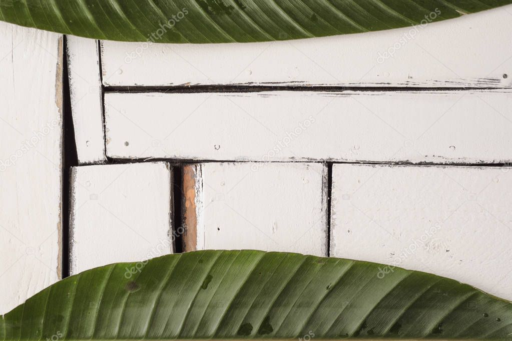 Green tropical leaves lie on a white background of plaque boards.