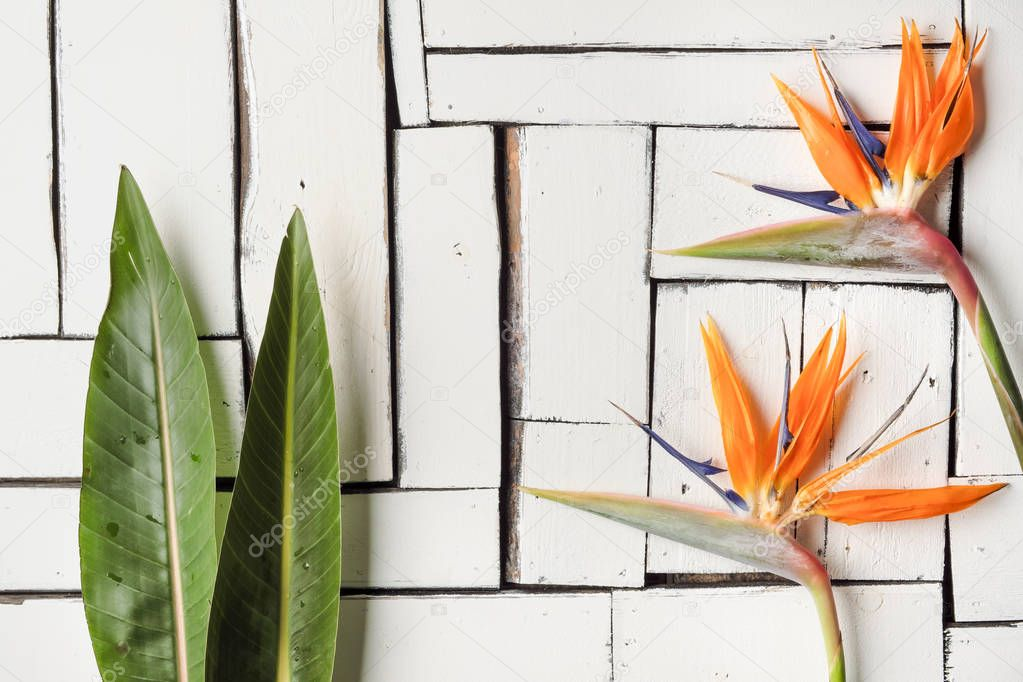 Orange tropical flowers and exotic leaves lie on a table of white plaque boards. A bird of paradise.