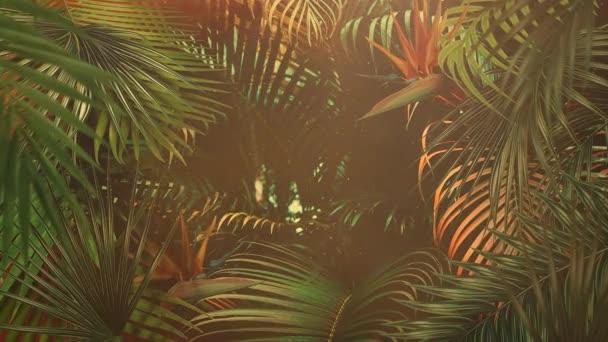 Closeup tropické listy stromů, léto pozadí