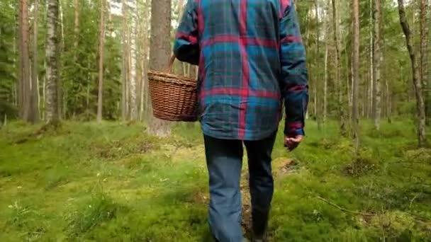 Pilzsammler sammeln am Sommertag Pilze im Wald.