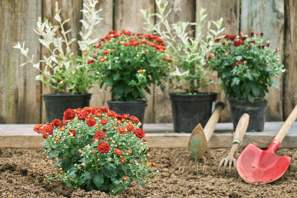 Garden flowers for planting and garden tools