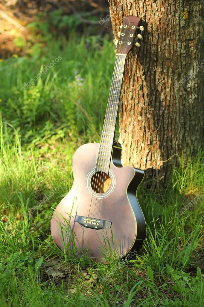 Sunlit acoustic guitar leaning against tree trunk outdoors