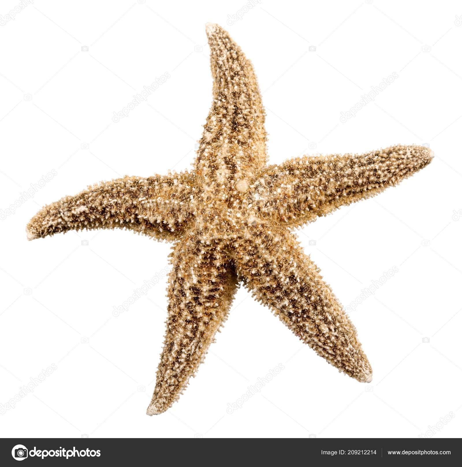 Starfish Stockfoto Billiondigital 209212214