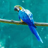 Části ptáků exotické barevné ohrožený papoušek ara