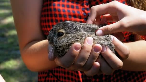 Girl is Holding a Small Wild Fluffy Baby Bunny. Little Bunny in the Palm.