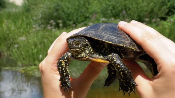 A női kéz a háttérben folyó kis folyó teknős