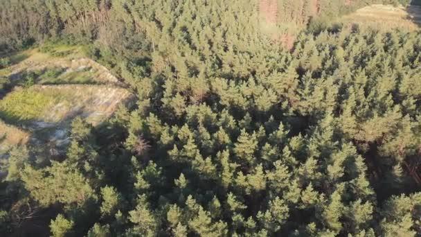 Borový les, letecký pohled s DRONY. Pohled shora v parku s borovicemi