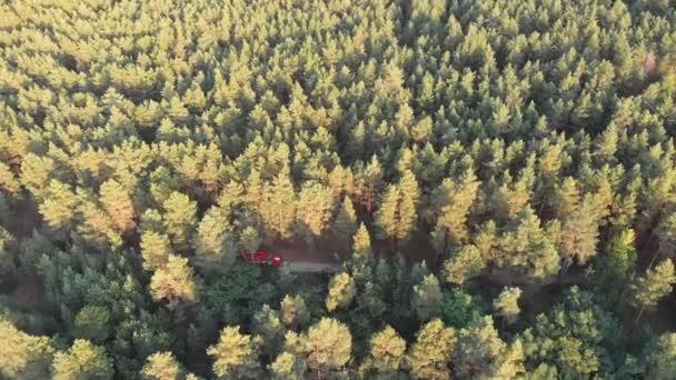 Pohled shora z dron na červené Fire Truck jízdy po silnici v borovém lese