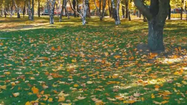 Őszi Park sárga levelek, a fű és a fák