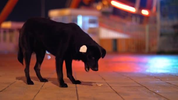 Schwarzer streunender Hund in einem Vergnügungspark in der Nacht beim Essen auf der Straße