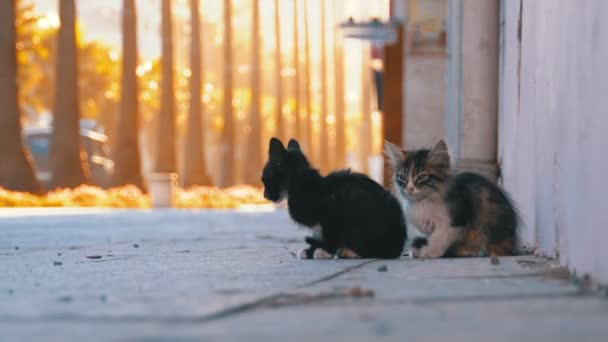 Two Homeless Kittens on the Street of the City