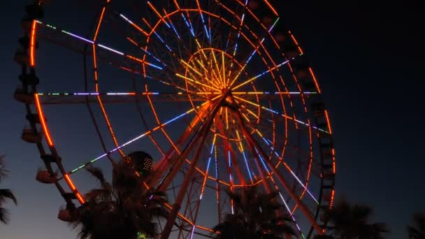 Ferris Wheel Lights at Night and Palm Trees